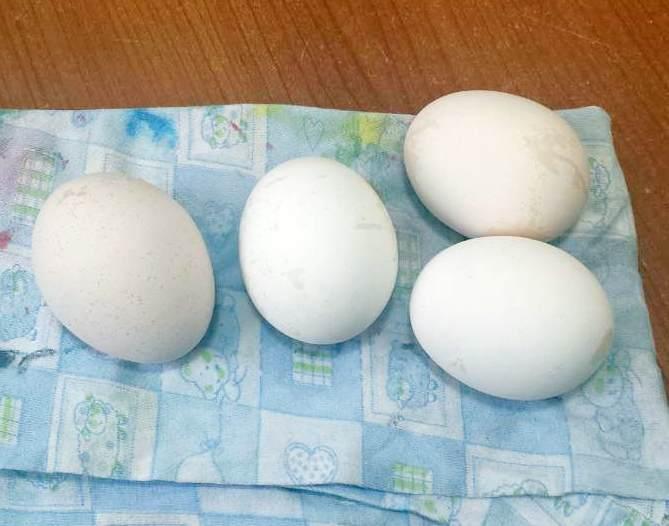 izbeljena jaja